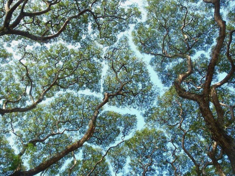 Memorial Tree Program
